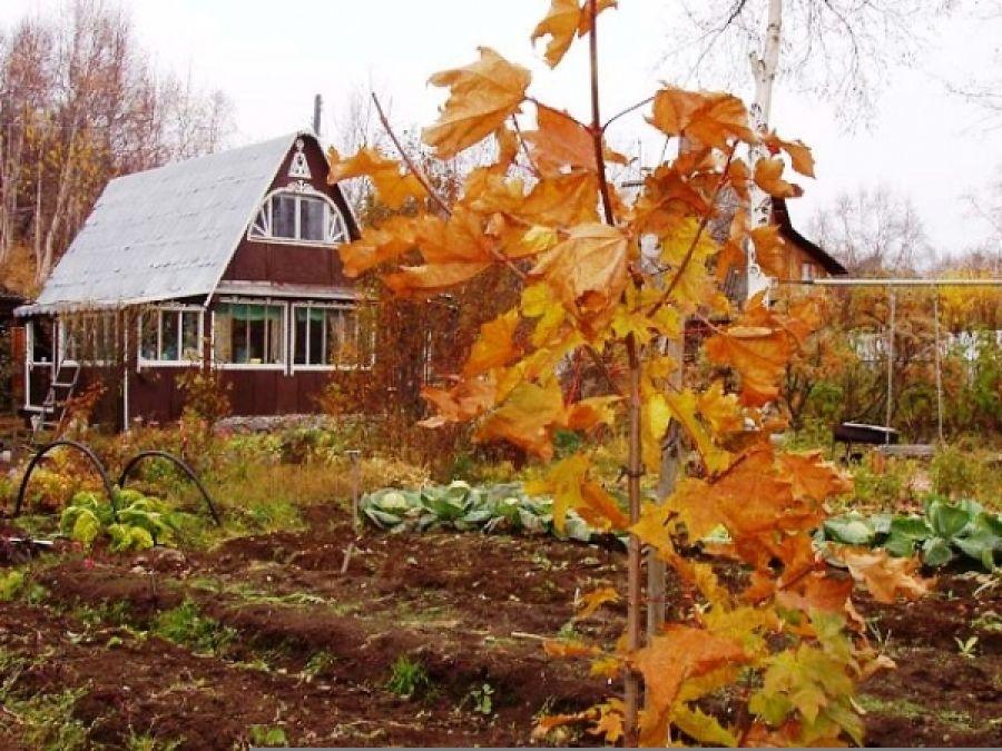 Календарь работ на огороде в октябре